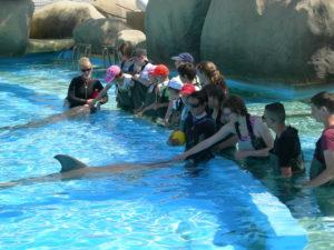 Caresser les dauphins