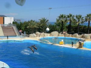 Le ballet des dauphins évoluant dans leur bassin avec ballons et anneaux et pirouettes avec les soigneurs fut magique.